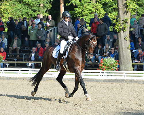 Smirnoff (Sir Donnerhall x Florencio I) ridden by Manuel Bammel Photo: Roz Neave